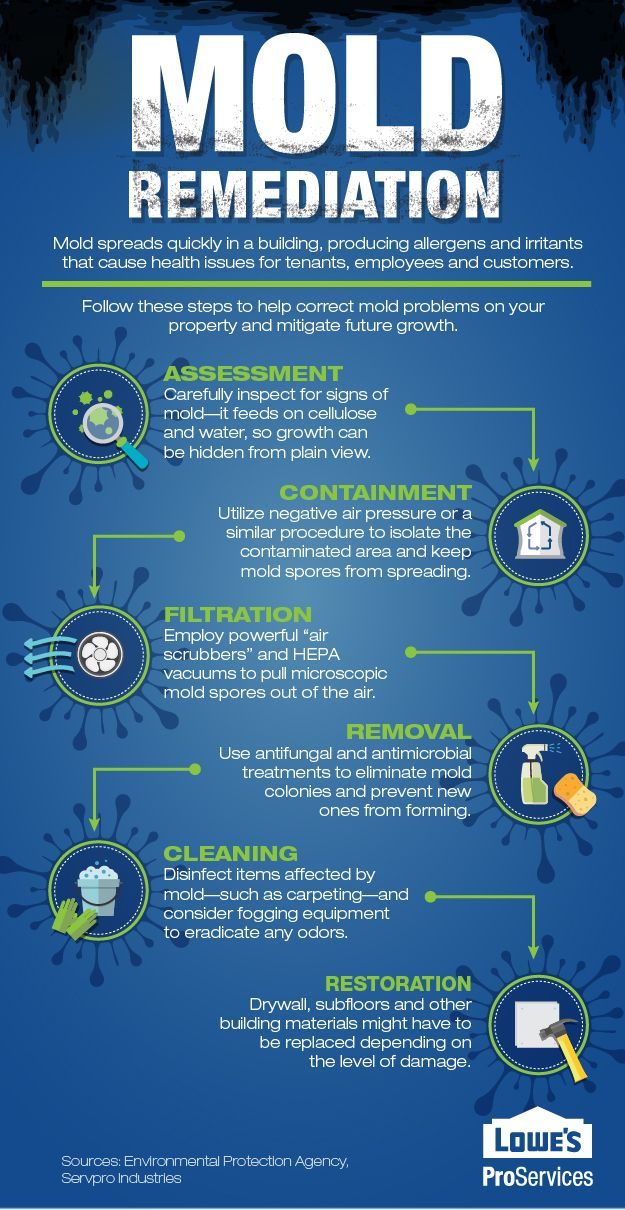 Mold remediation cleanup property management | Home // Life