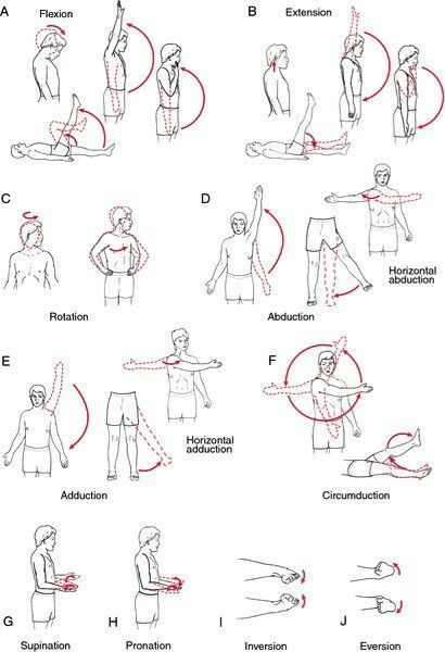 Pin By Theresa On Rom Pinterest Anatomy