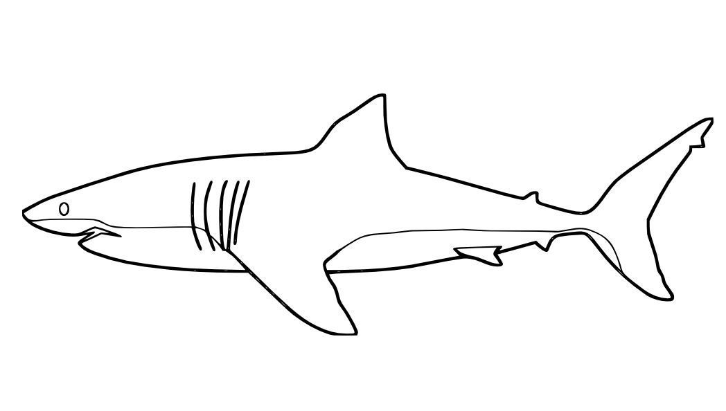 Realistic Great White Shark coloring page | Free Printable ... | 594x1048