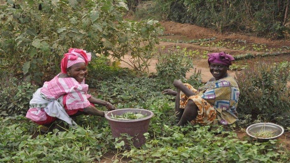 Les jardins de santé au Mali