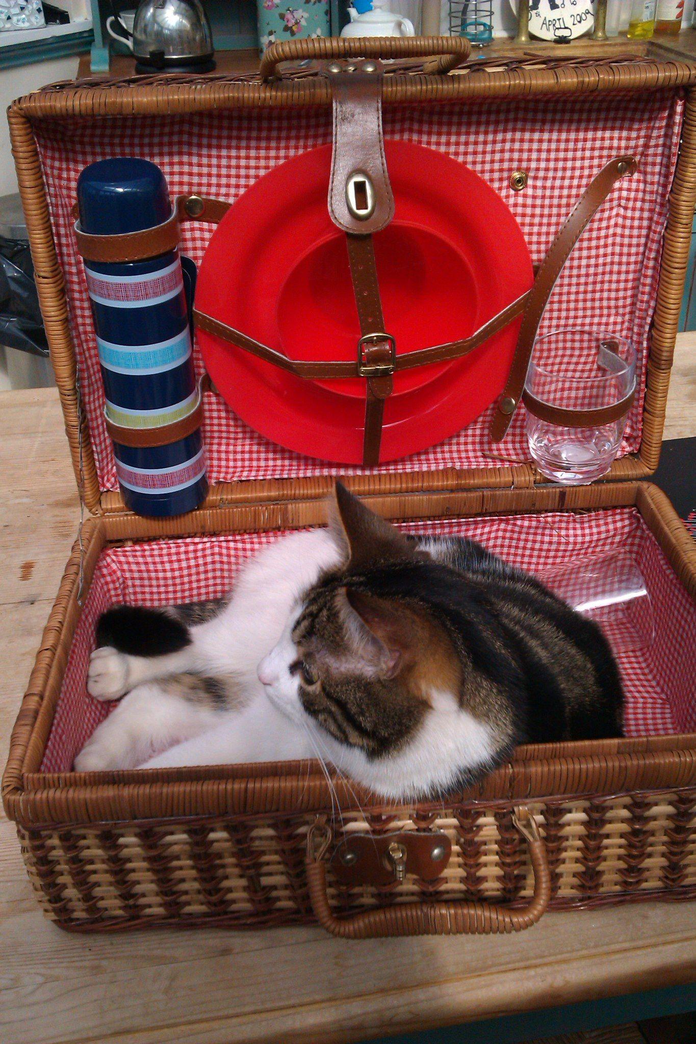 Cat picnic Cat paws, Cat basket, Cat love