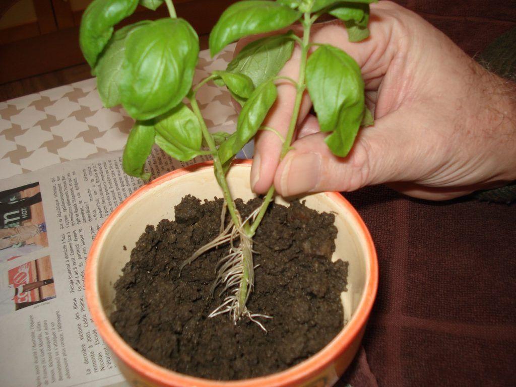 12 astuces pour bouturer correctement des plantes Page 8