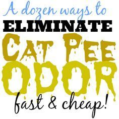 A Dozen Ways To Get Rid Of Cat Pee Odor Fast And Cheap