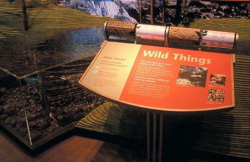 Turtle Bay Museum, Museums, Interpretive Planning, Exhibit Design, AldrichPears Associates - 091