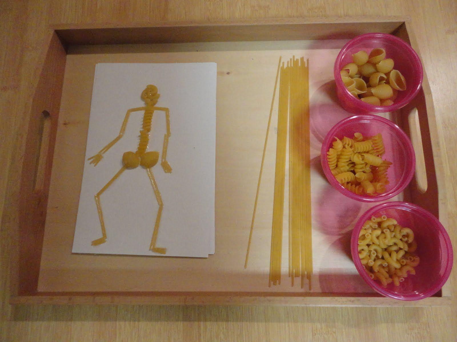 Montessori Inspired Skeleton Unit