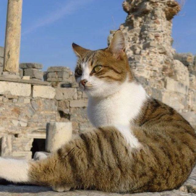 Taking a bath in the sun at the Ruins of Ephesus. - Ephesus, Turkey