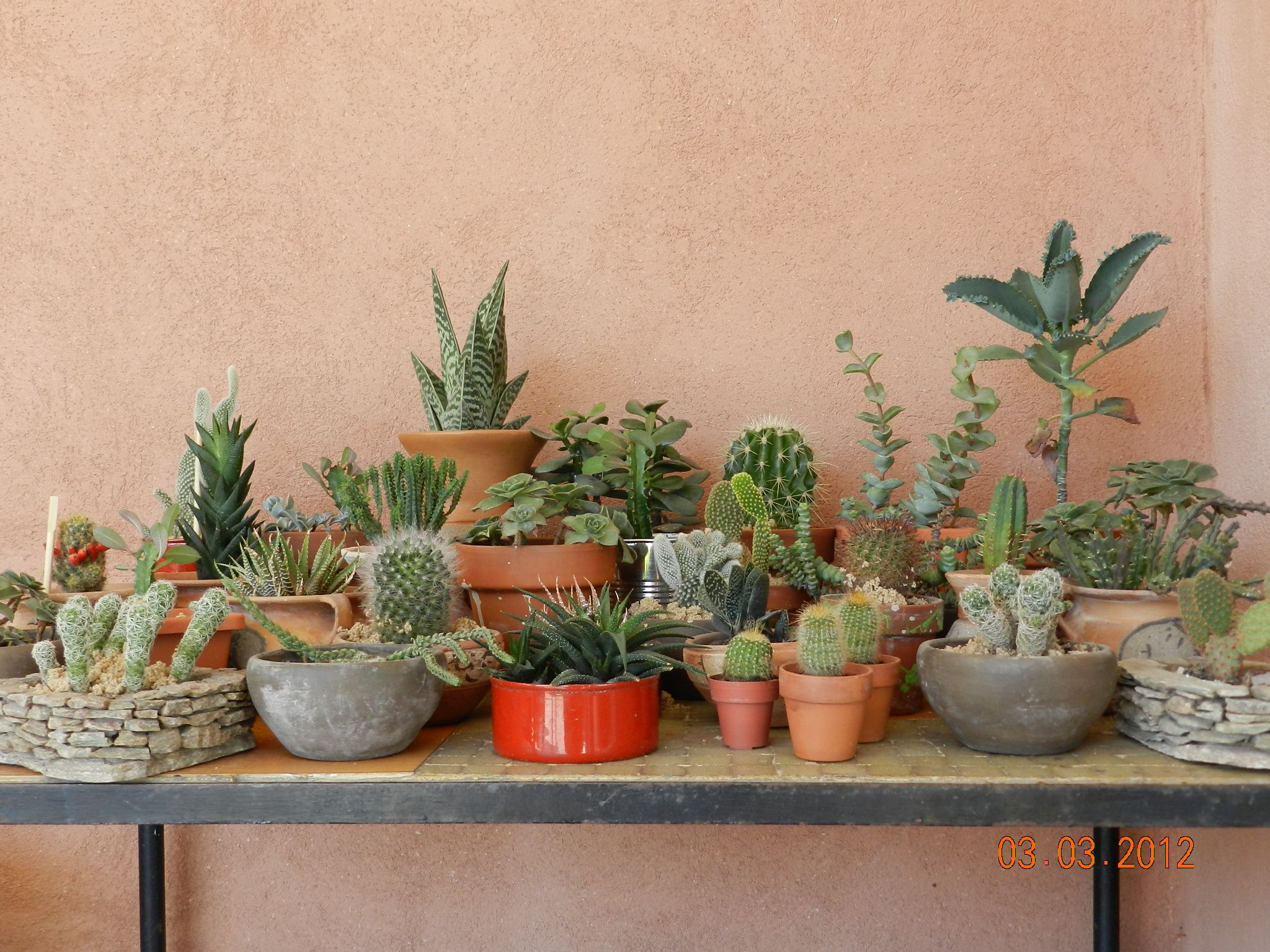 how to grow mini succulents