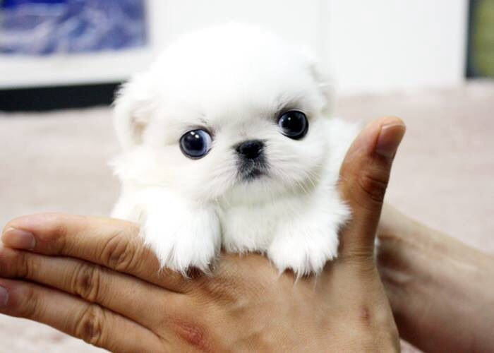 Not sure what kind if pup you are, but you're too cute!
