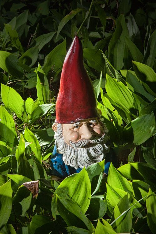 Hey, I found this really awesome Etsy listing at https://www.etsy.com/listing/67378229/garden-gnome-among-lilies-of-the-valley