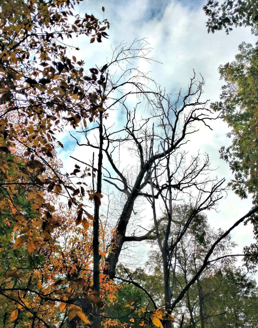 Asylum Lake Preserve Kalamazoo Michigan Color Photography Nature Photography Trees Leaves S Nature Photography Trees Nature Photography Autumn Landscape