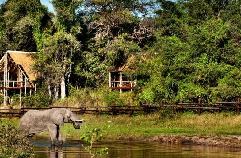 Find out why Botswana is one of the best safari
