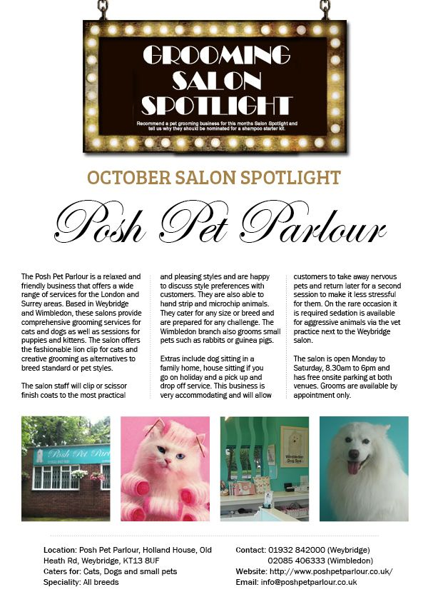 Salon Spotlight October 2014 Posh Pet Parlour Grooming Salon Groomer Salons