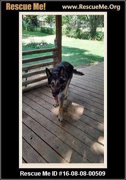 Ohio German Shepherd Rescue Adoptions Rescueme Org German