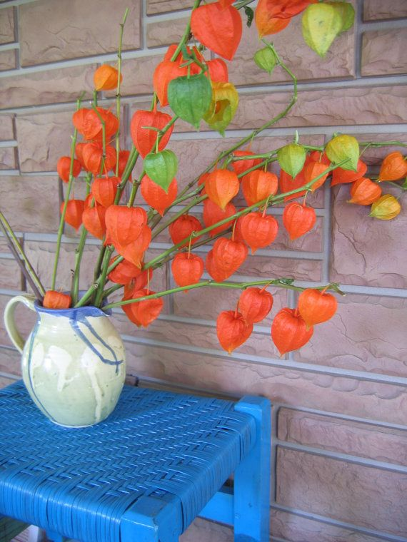 Bought A Bunch Of These Beautiful Orange Chinese Lanterns For