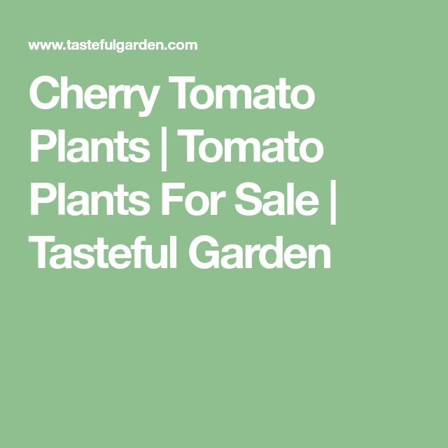 Cherry Tomato Plants Tomato Plants For Sale Tasteful 400 x 300