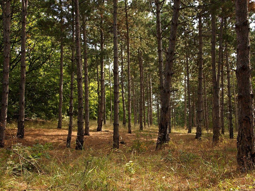 En vivo y en tiempo real la deforestación que sufre nuestro planeta.