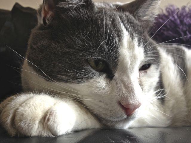 Cute cat chilling. Sammy