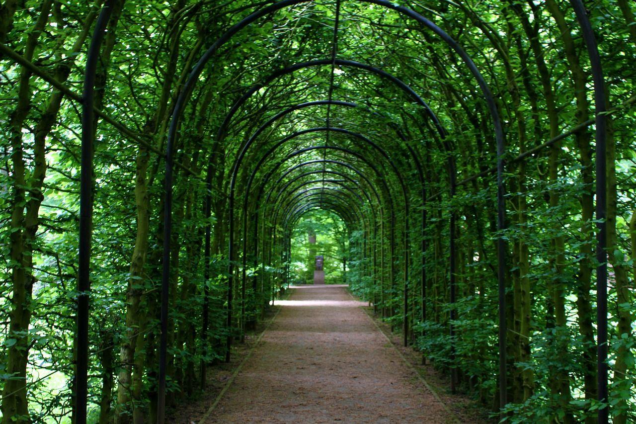Installer Un Arceau Dans Son Jardin Jardins Hydrangea Grimpant Creation Jardin