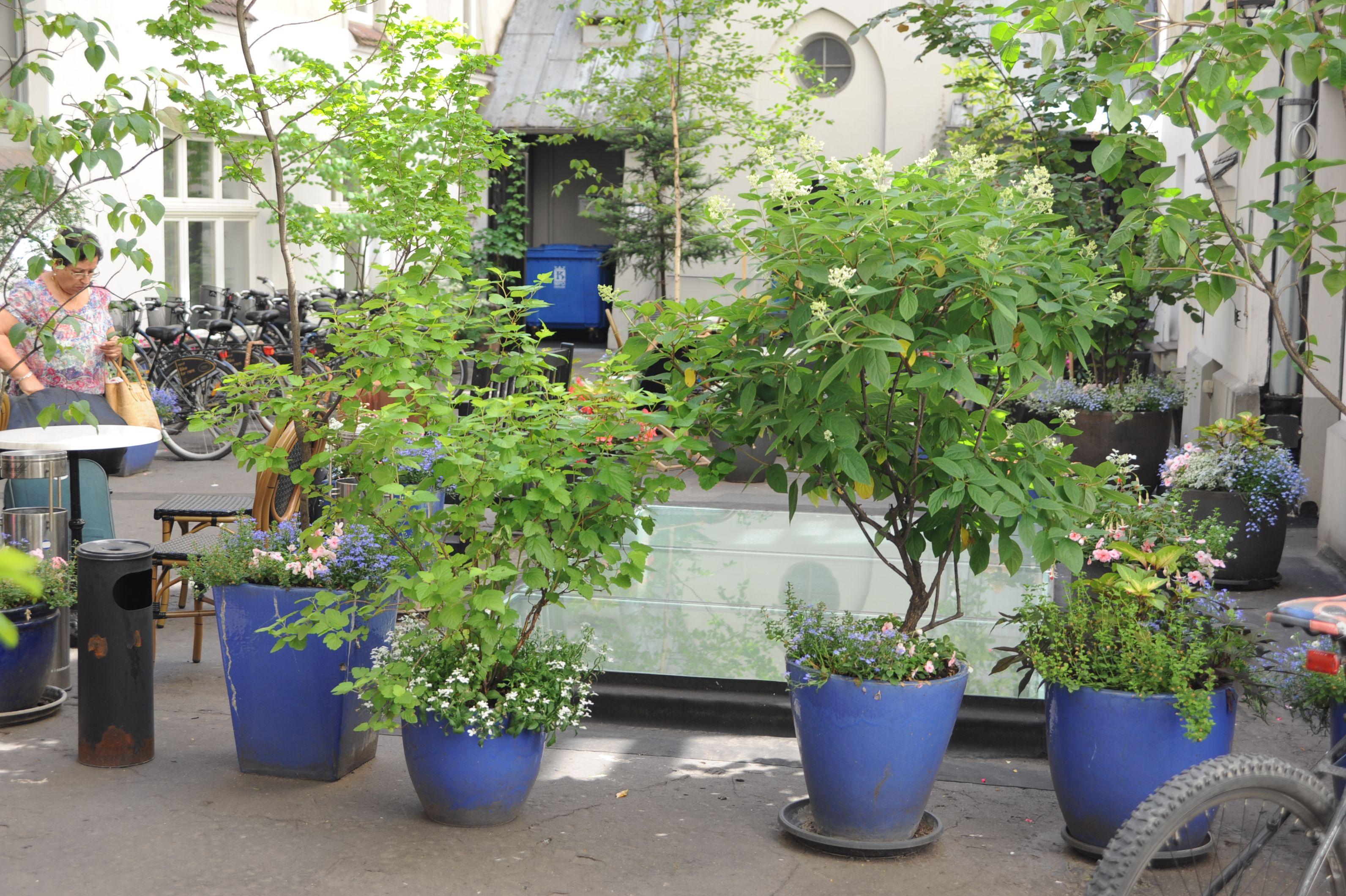 Ogrod Lobzow Ogrod Lobzow Plants