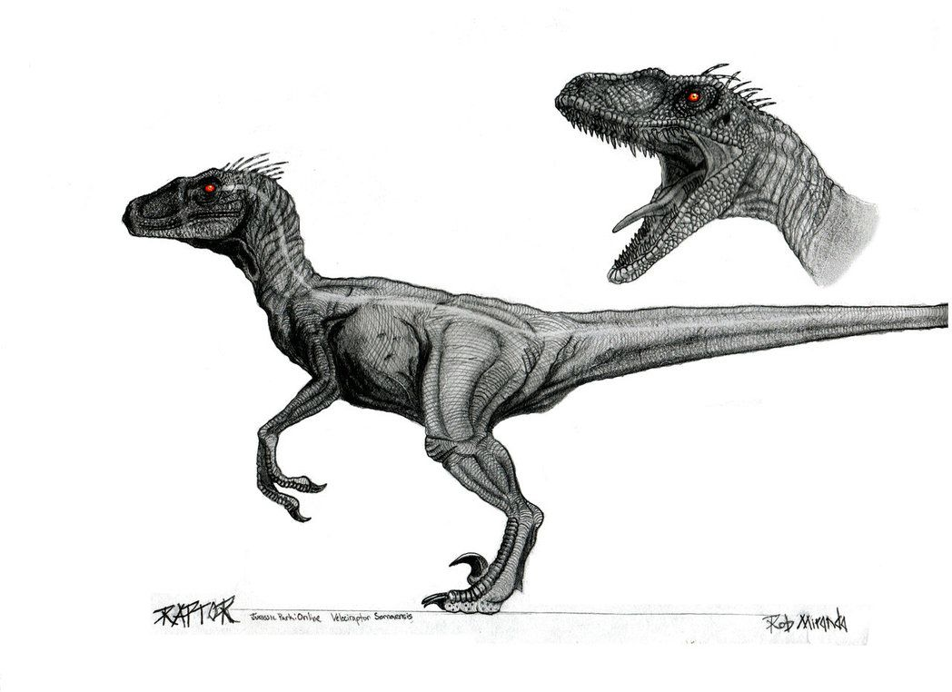 40+ How tall is a raptor ideas in 2021