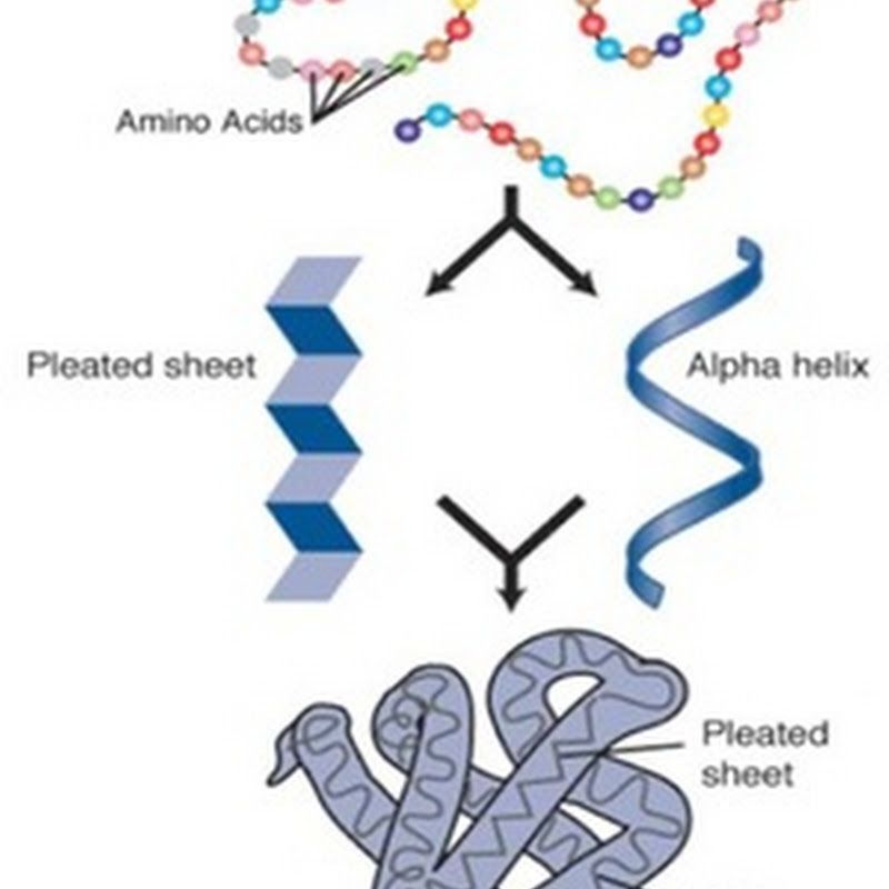Diagram Quiz on Steps in recombinant DNA or rDNA technology ...