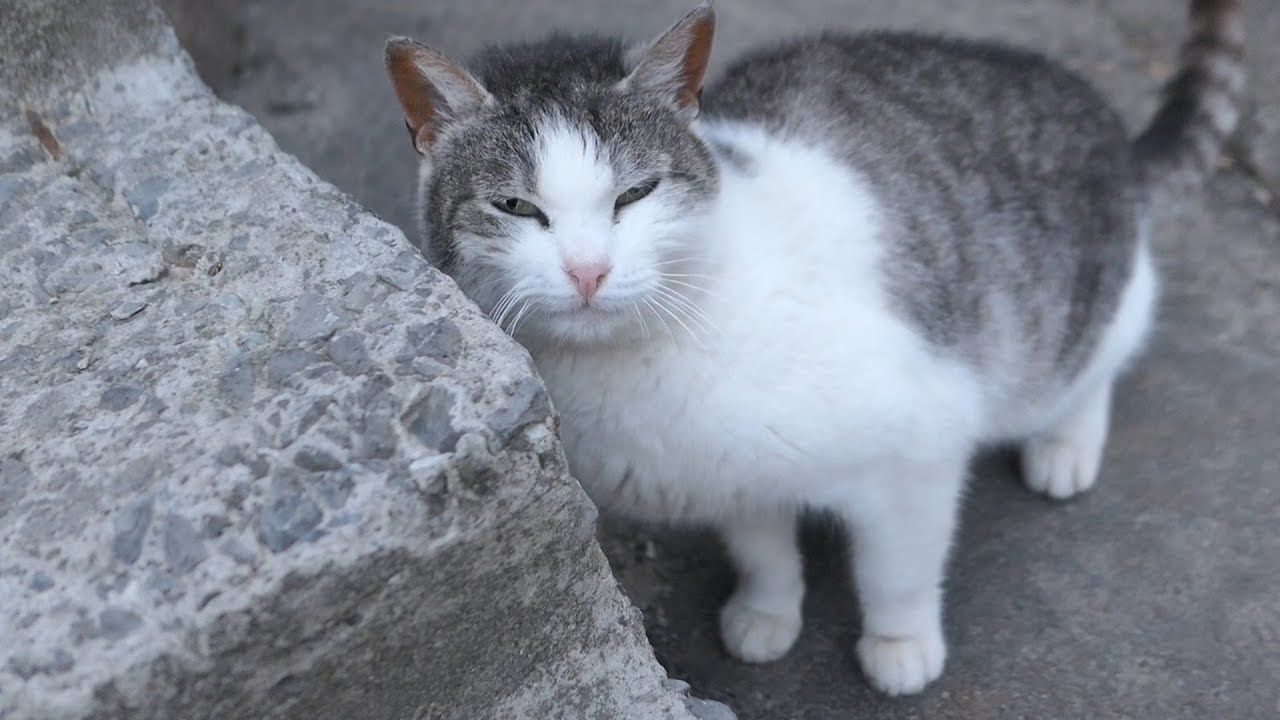 Friendly Cat Today Is Not Hungry Cat Today Cats Pets