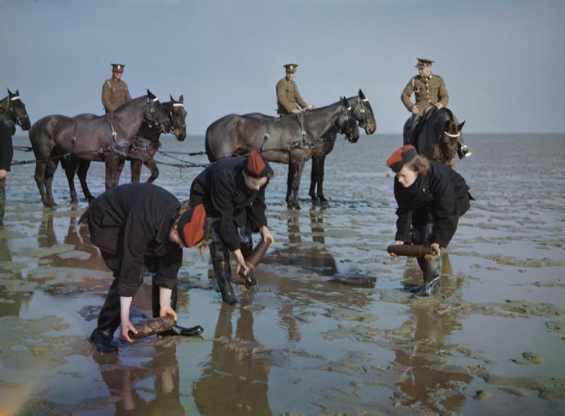 Home Royal Horse Artillery Leigh On Sea War Horse