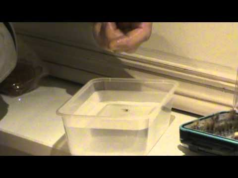 Classic Video Tip: A Ridiculously Simple Way to Dry Your CDC Fly on the Water - Orvis News