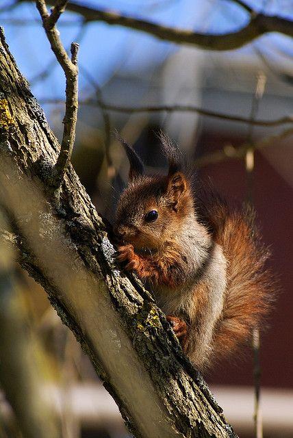 Baby squirrel!!! ~ Sarah's Country Kitchen ~