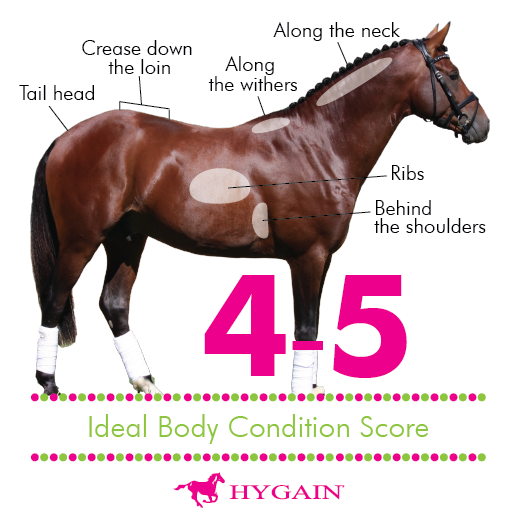 **FREE DOWNLOAD** All horse owners want their horses to be