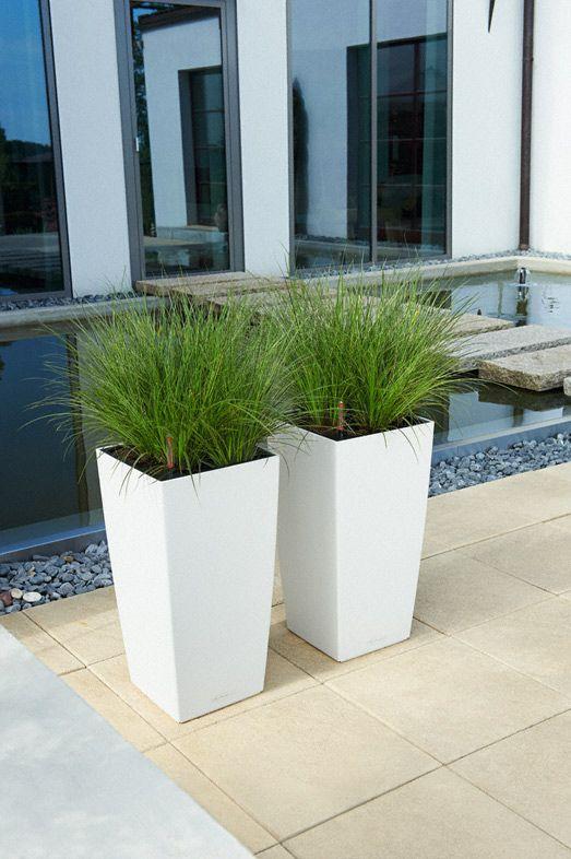 lechuza cubico color pflanzen pinterest garten pflanzen und terrasse. Black Bedroom Furniture Sets. Home Design Ideas