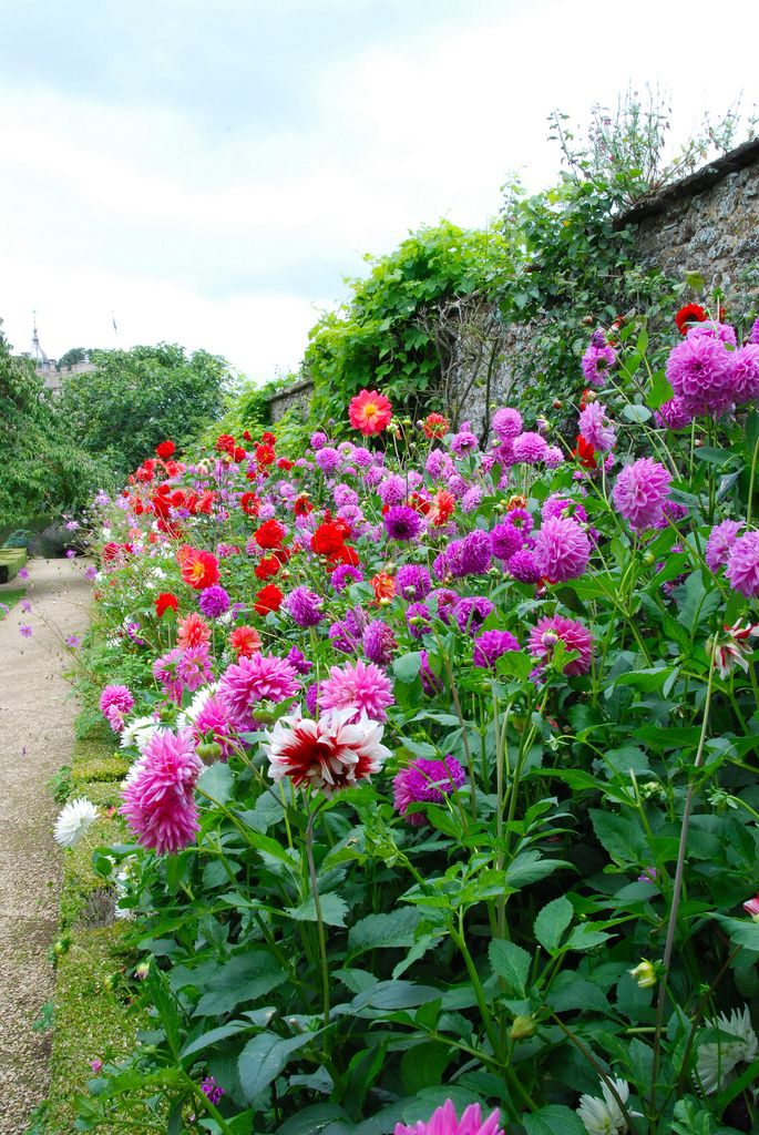 Осенние цветы в саду: 65 Фото с названиями | Цветоводство ...