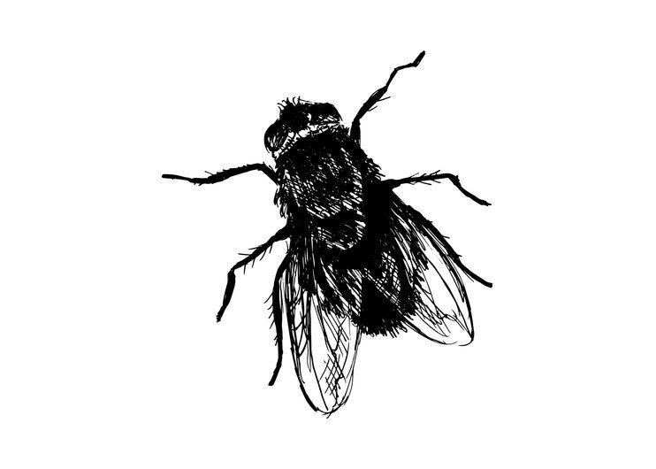 Drawing House Fly Art Print By Artono X Small In 2021 Drawings Art Prints Art