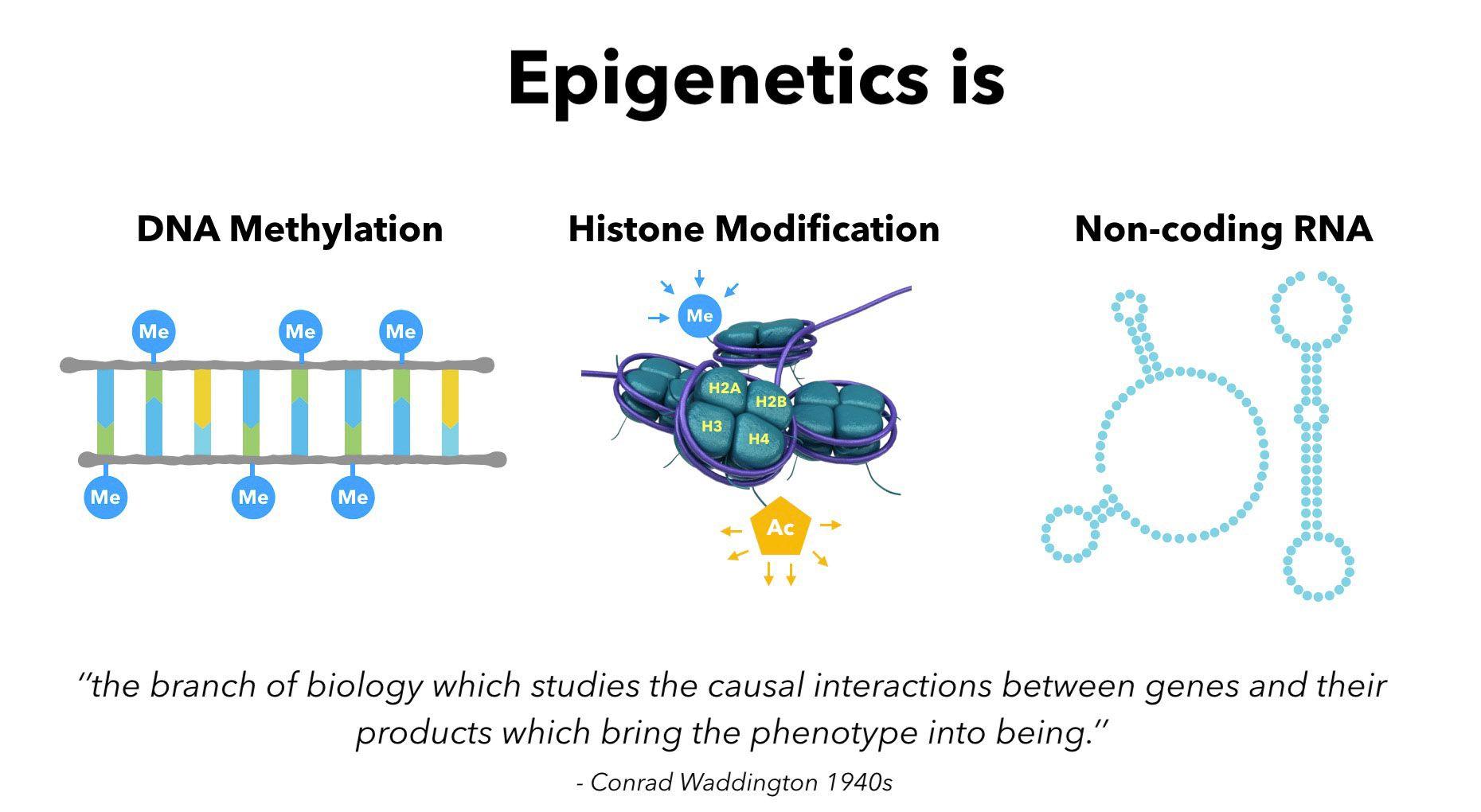 Epigenetics 1 Introduction To Epigenetics