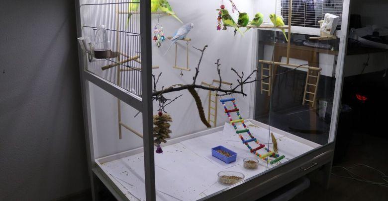 16++ Custom acrylic bird cage inspirations