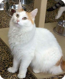 a4cd8790fd Pin by Cathleen Cooks on ♥ ♥ ADOPTABLE KITTIES ♥ ♥