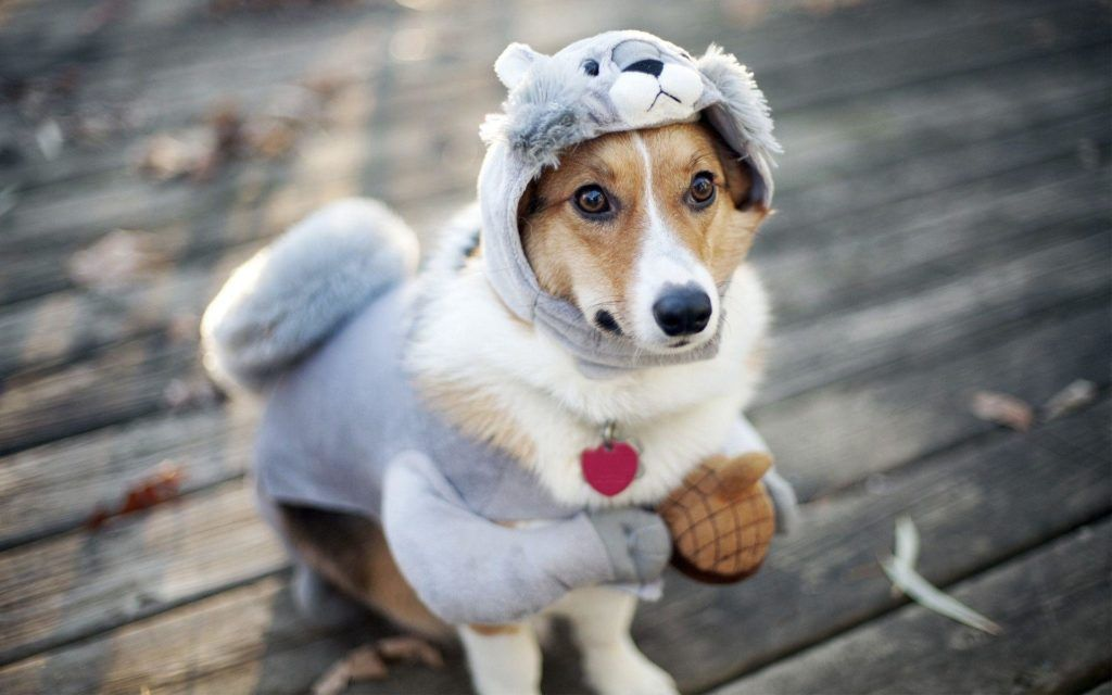 Funny Dog Wallpapers Cute Dog Wallpaper Funny Dog Pictures Dog