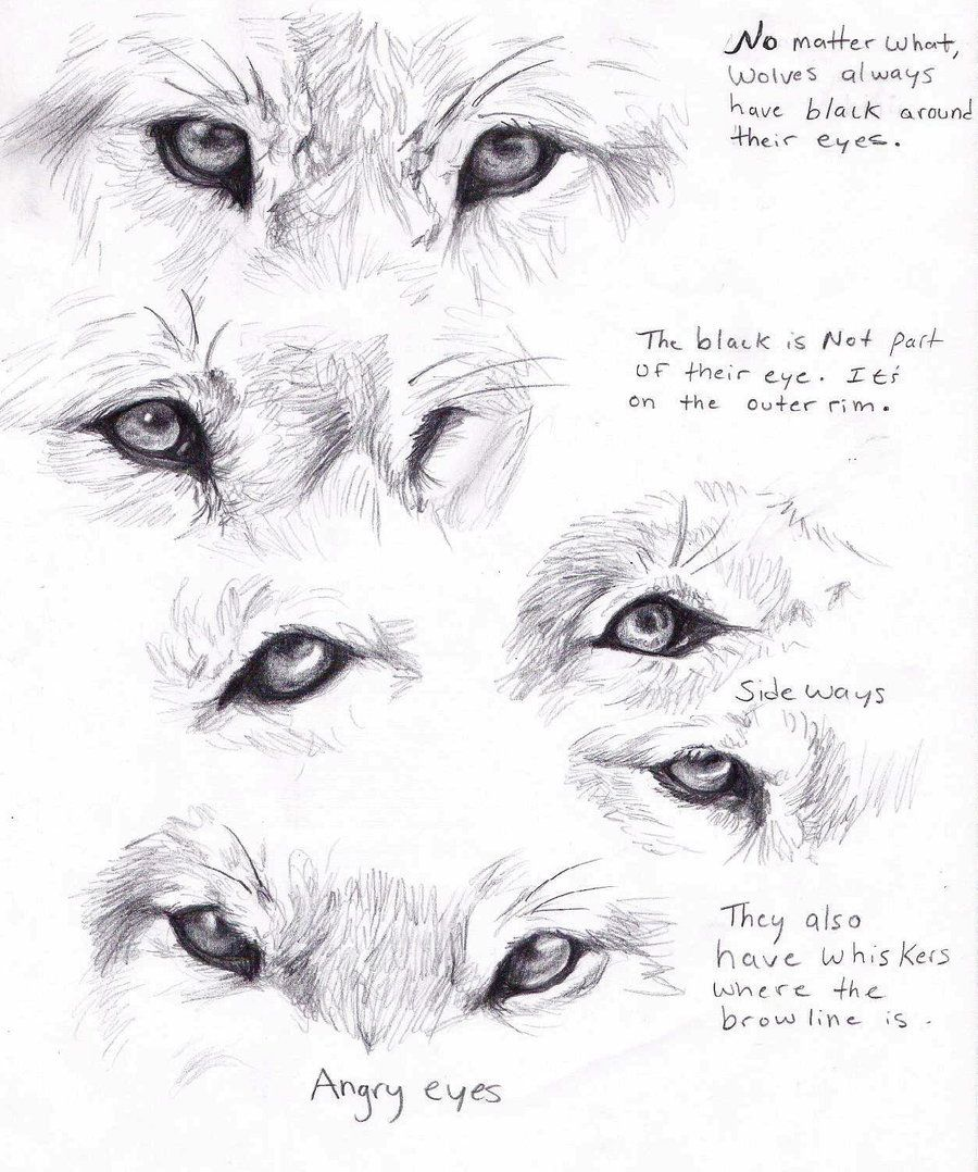 Wolf Eyes By Adothwolf On Deviantart Wolf Eyes Wolf Drawing Animal Drawings