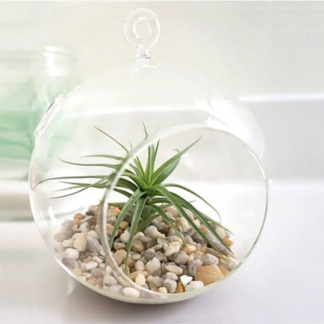 Glass hanging planter terrarium globe globe
