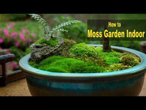 How To Make A Moss Pot Emmymade Youtube Moss Garden