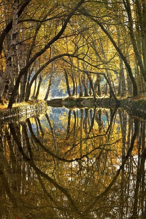 Autumn Trees Reflected In A Stream Reflection Pictures Water Reflections Nature Photography