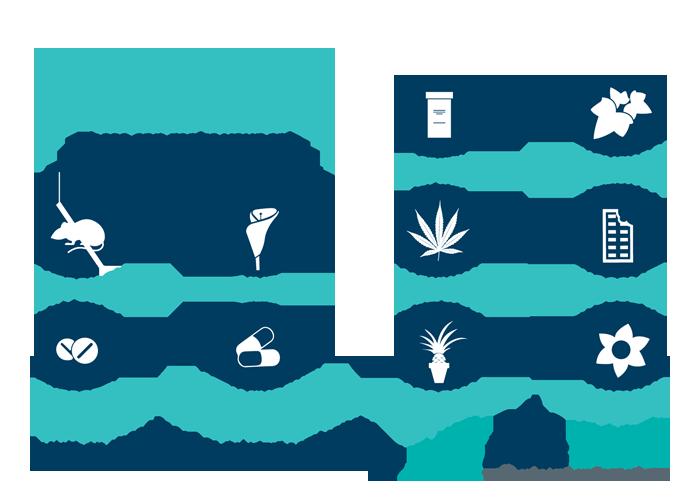 10 Cat Household Poisons Cool Pets Best Pet Insurance Pet Health