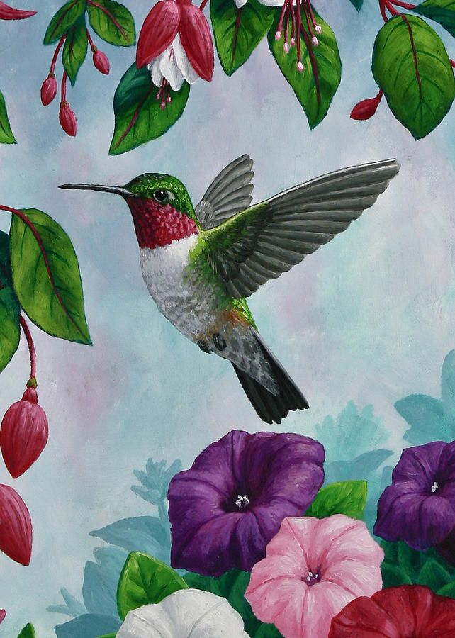 Hummingbird greeting card 1 canvas print canvas art by crista hummingbird greeting card 1 canvas print canvas art by crista forest hummingbird bird and paintings m4hsunfo