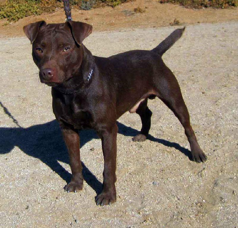 Check Out Http Patterdale Net Patterdale Terrier Puppies For Sale Bred By A Top Bre Patterdale Terrier Puppy Patterdale Terrier Patterdale Terrier For Sale