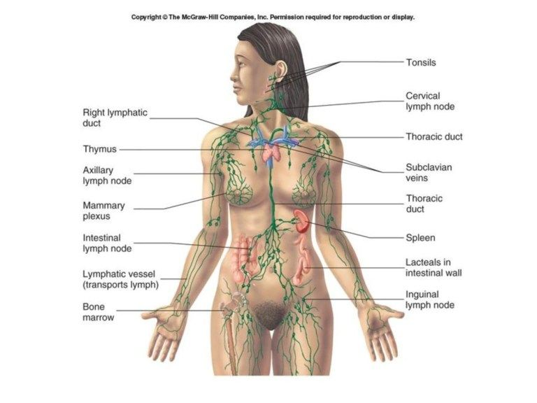 Female Lymphatic System Diagram Maps Lymph Nodes Map Collection Of Map Pictures Koibana Info Lymphatic System Lymphatic System Diagram Lymph System