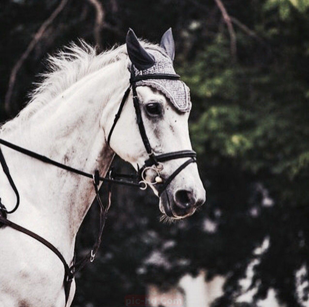 أجمل خلفيات خيول صور الحصان In 2021 Horses Animals Pics