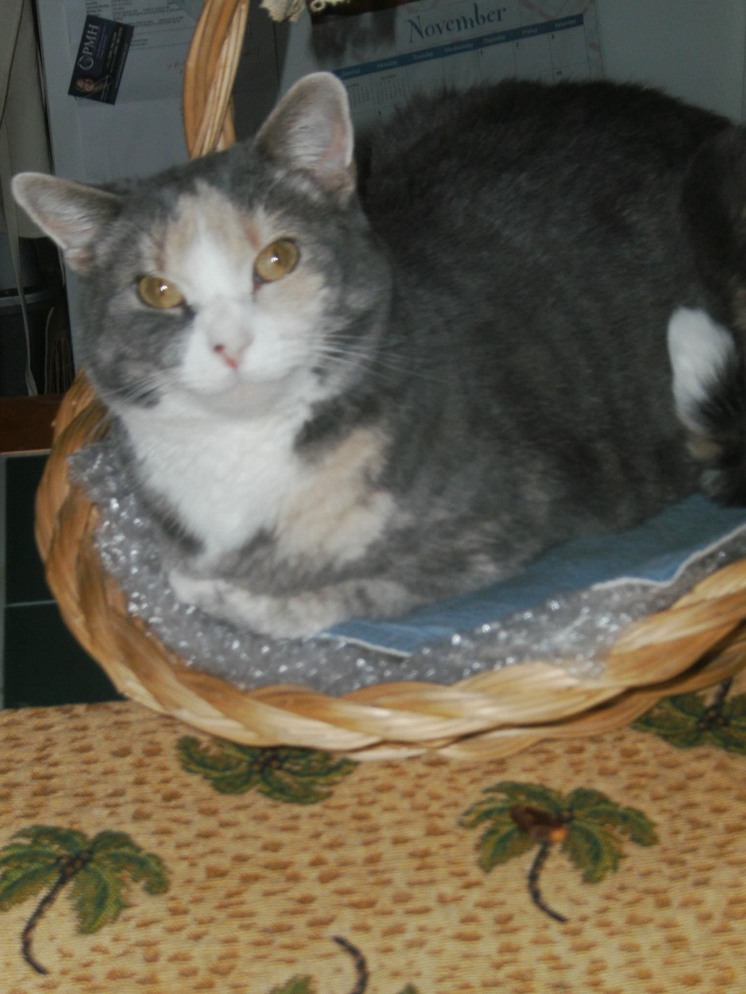 Lili our kitty. Kitty in a basket.