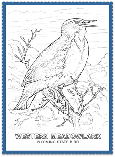 Wyoming State Bird Coloring Page