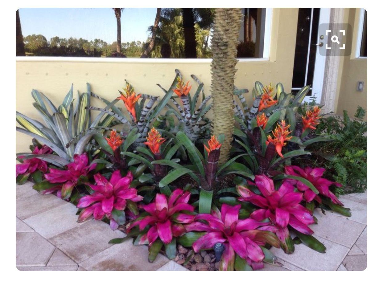 Gardens By Maria: Pin By Maria Gonzalez On Patio Garden