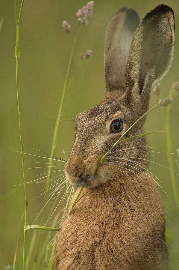 """""""Na...!"""" animalphotographyideas Animal photography"""